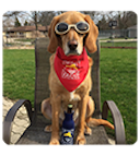 Hound wearing sunglasses and red saltydog bandana, sitting on deck chair with beer in a salty dog bottle suit.